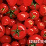 tomatoes, tomato garden, pest control, tomato taj mahal