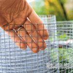 tomatoes, tomato garden, pest control, tomato taj mahal mesh wire
