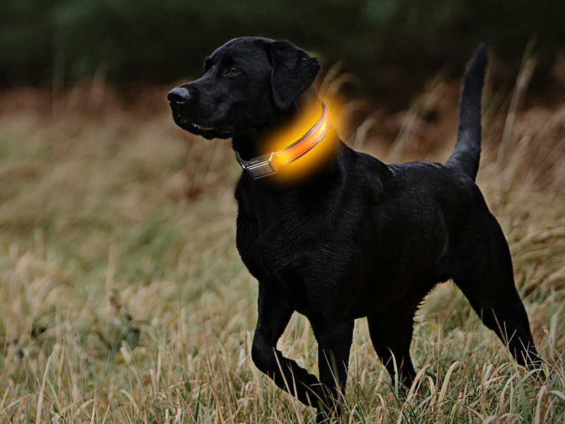 Brite-Strike Lighted Dog Collar, SHOT Show 2016, off the grid gear