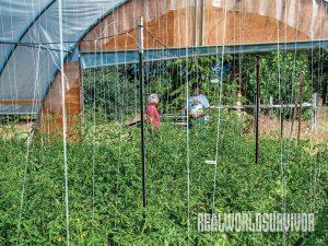 farming, farming tips