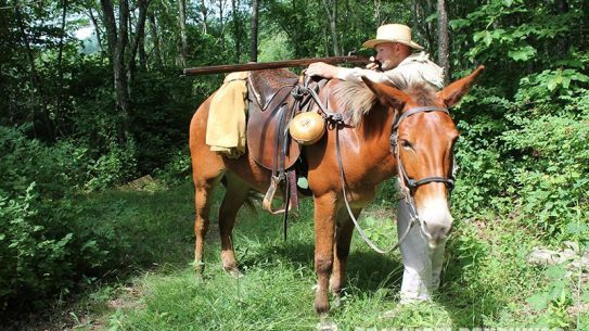 Mules can be ideal farm animals to help you tackle tasks on the homestead with ease.