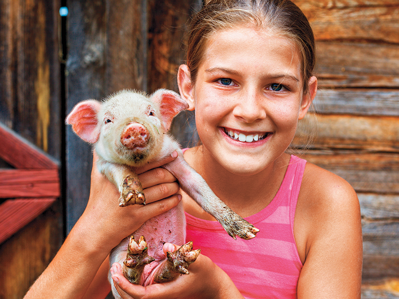 pig, farm, raising pigs, farm animals