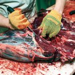 Barter & Trade dressing deer carcass