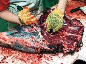 Barter & Trade dressing deer carcass
