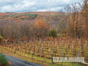 BashaKill Vineyards vines