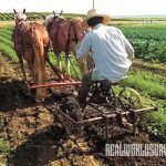 Farm Hack, homestead, farmland, two-horse implement