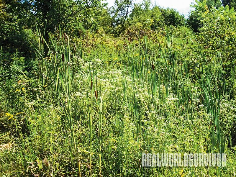 water-seeking-indicator-plants
