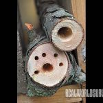 DIY, garden, yard, insects, nesting, bugs, bug house, bug out, drilled branch
