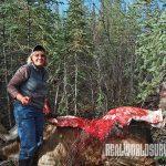 hunting, moose hunting, skinning moose
