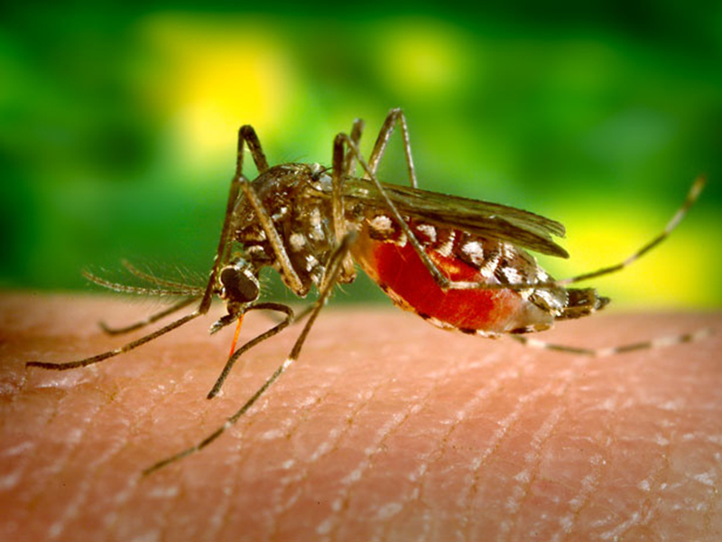 Zika Virus, diseases, virus, outbreak
