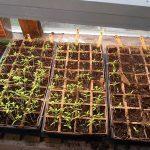 seed bartering