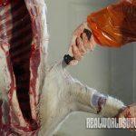 deer meat shoulder