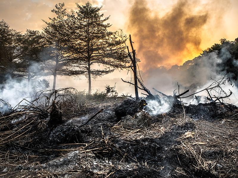 wildfire spreading