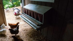 owning chickens Automatic Chicken Coop