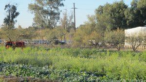 Survival Gardening, hiding garden, vegetables