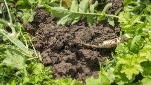 soil quality