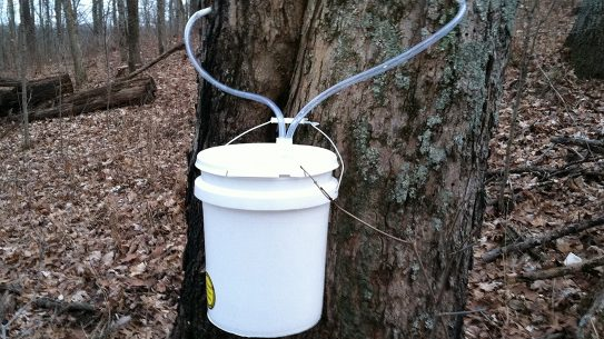 Syrup, tube, sap, bucket