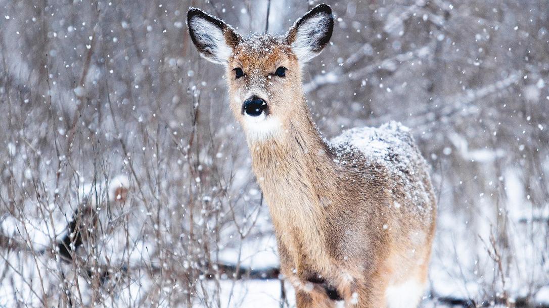 Big game, elk, deer, survival