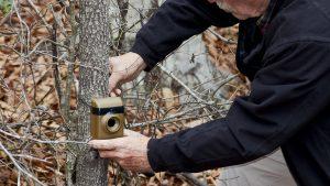Trail cameras positioning