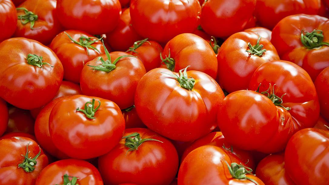 Top Tomatoes Tricks lead