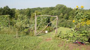 Superior Summer Veggies entrance, natural fence