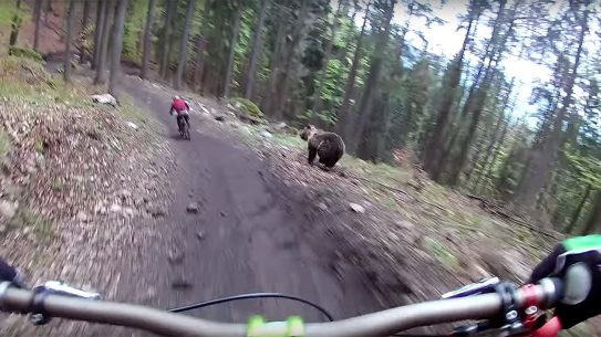 Bear Chase mountain bikes lead