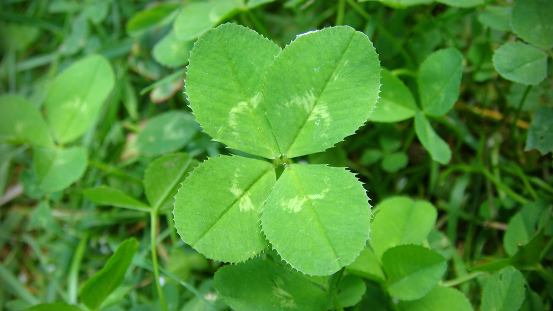 Edible Plants: Clover, B vitamins, choline, beta carotene