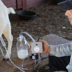goat milk equipment milker