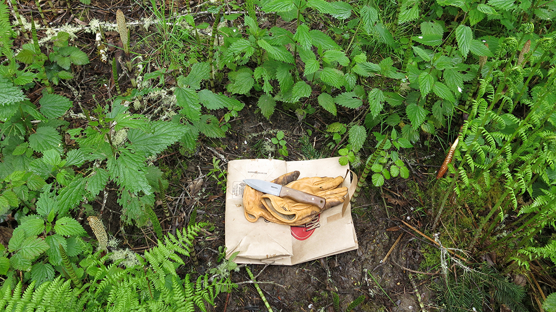 Edible Plants: Stinging Nettles