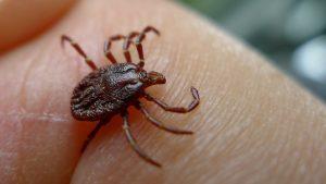 Deer ticks, repelled, permethrin