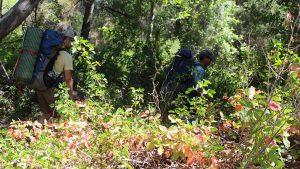 poison oak, trail, bush,