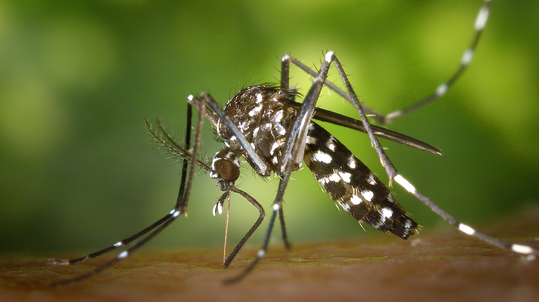 mosquito on skin, green background