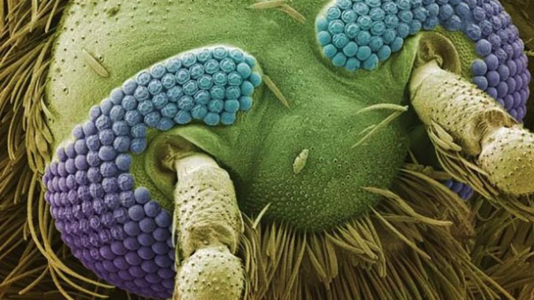 green, blue, purple mosquito face