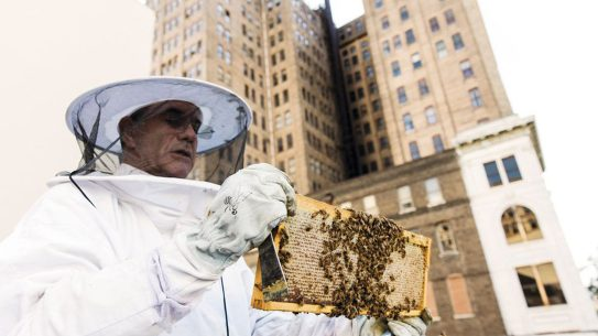beekeeping, hive in the city