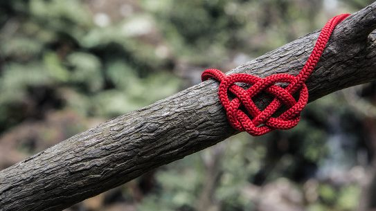Survival Knots