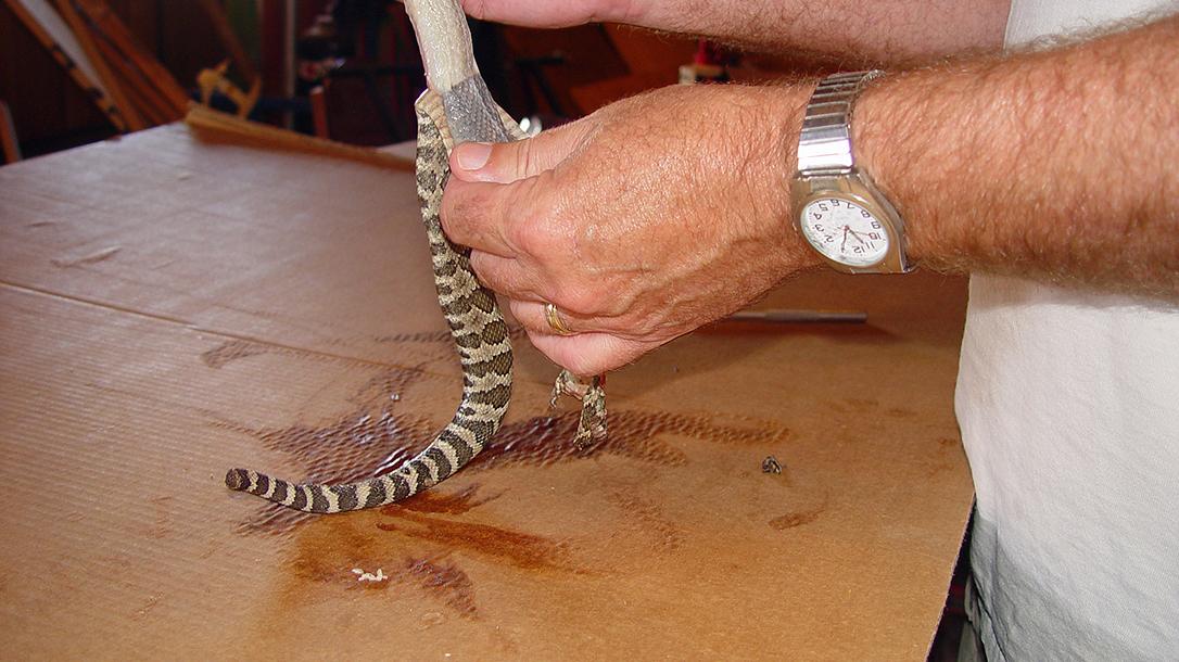snake skin, peeling off the skin