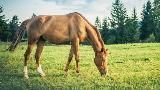 Owning a Horse, horse grazing in a meadow
