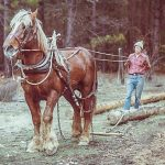 Fire-Wise Homestead horse pulling log