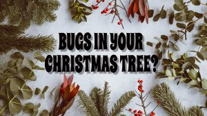 Christmas tree infestation, holiday branches, title card