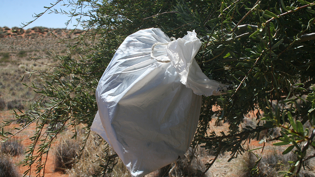 plastic bag wrapped around leaves