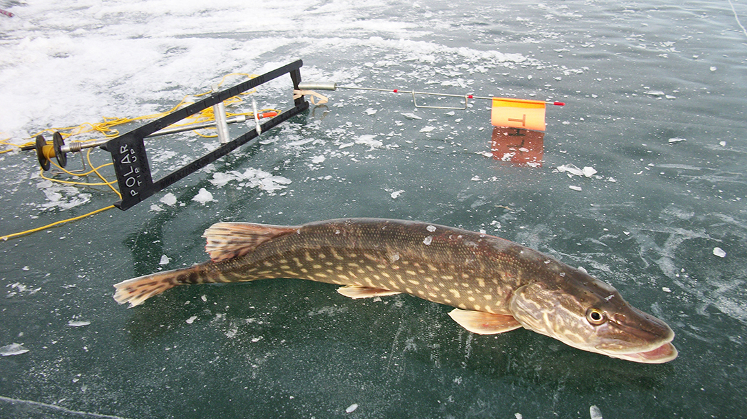 ice fishing, trout, ice