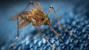 mosquito, insect-borne diseases