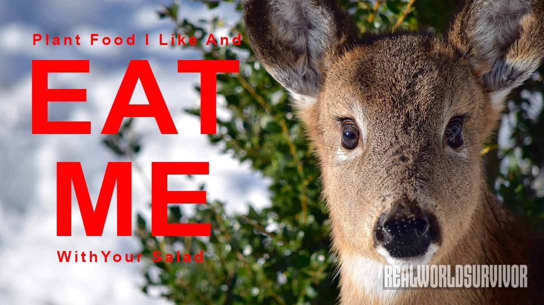 Deer in the snow, wildlife