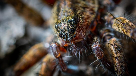Fear of Spiders, Facing Arachnophobia