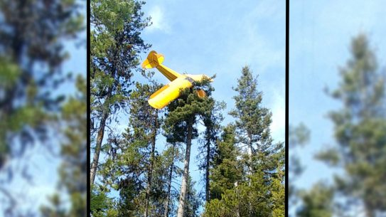 plane crash tree