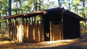 Survival cabin, forest