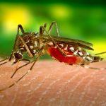 mosquito, skin, biting