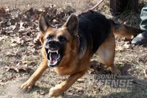K9 Bodyguards: Versatile Home-Defense