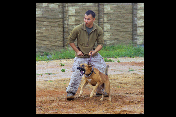 K9 Bodyguards | Canine Training | Photo by Dept. of Defense