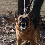guard dog, guard dogs, protection dog, protection dogs, dog leash